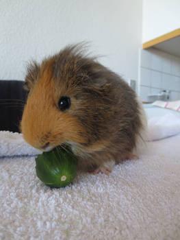 Yum cucumber