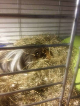 Snuggling in the hay