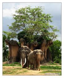 Elephant Walk by LeTHaL-1-