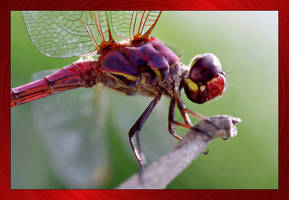 DragonFly by LeTHaL-1-