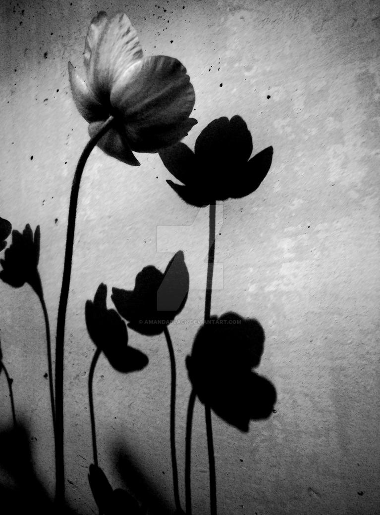 Shadows Of Flowers By Amandablack On Deviantart