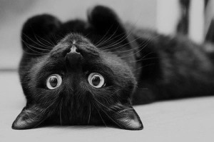blackcat-heart's Profile Picture