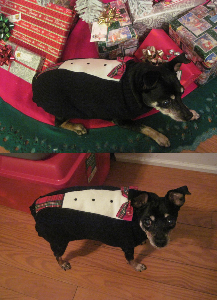 Doggie tux by kitkatnis