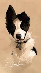 Diana Quick pet portrait
