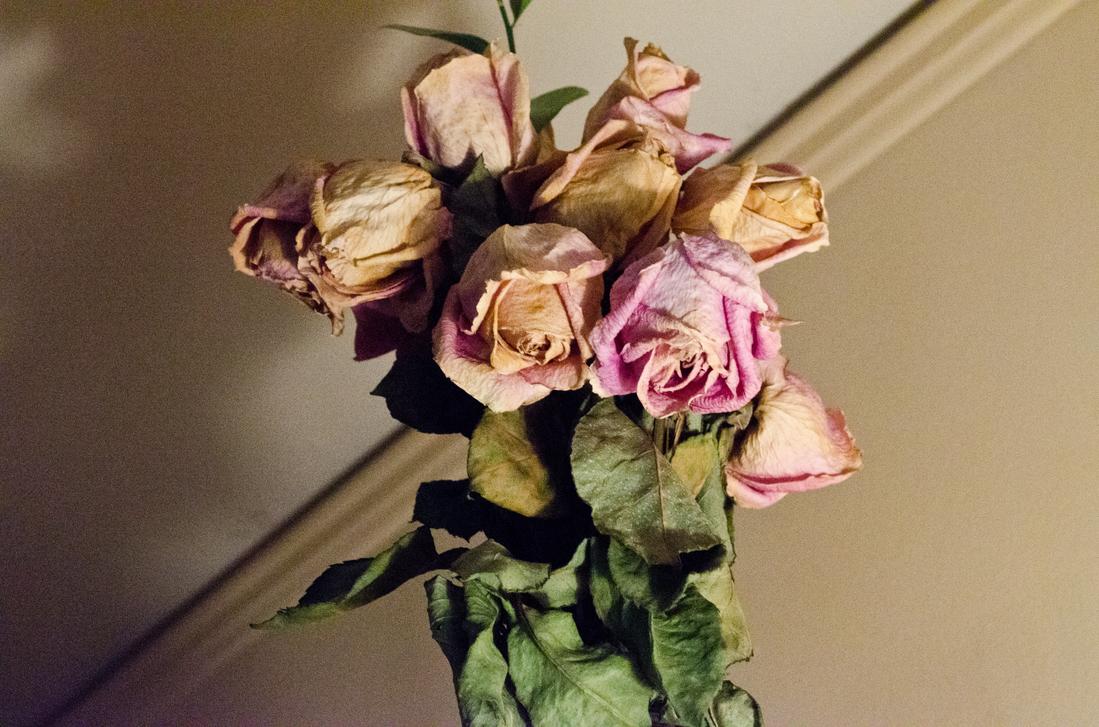 Dead Flowers Cliche Project By Shamira G On Deviantart