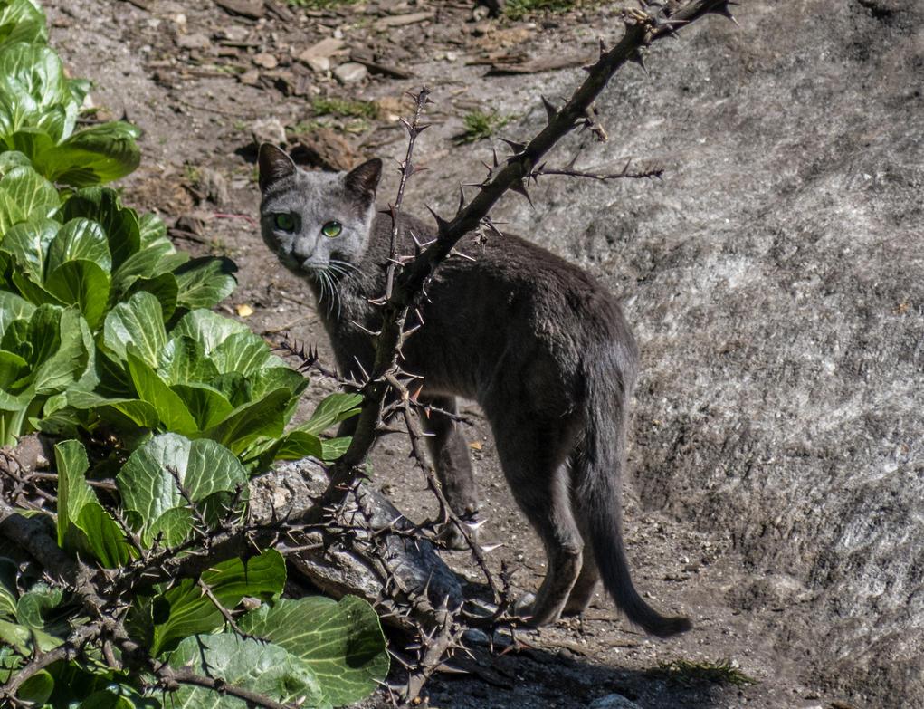 Street cat in Nepal by ice-grip