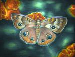 Butterfly by telegrafixs