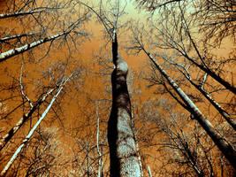 reach for the sky by NickJames121
