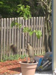 fig_tree_bandid_2
