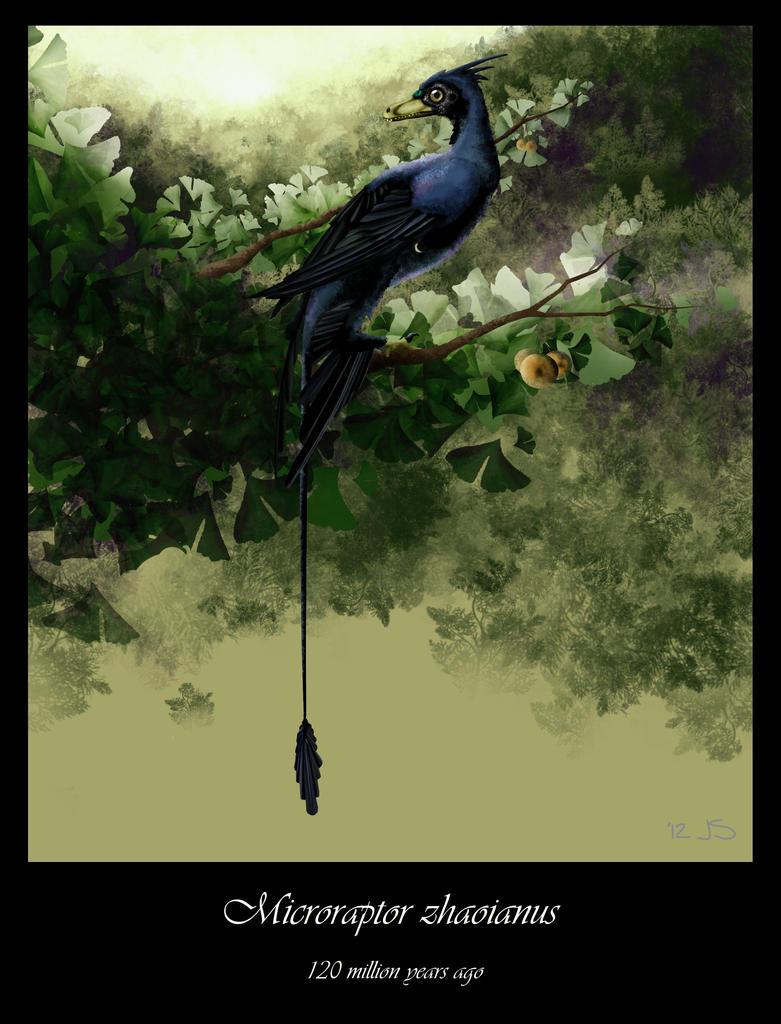 Microraptor zhaoianus by KousaPancakes