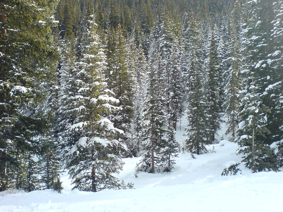 Copper Mountain's Trees by DJ0Hybrid