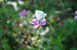 Butterfly on Flower in Summer '12 Stock