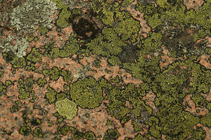 Lichen by JusticeStock