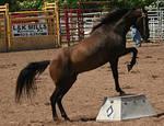 Horse Tricks 1
