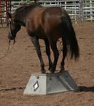 Horse Tricks 3