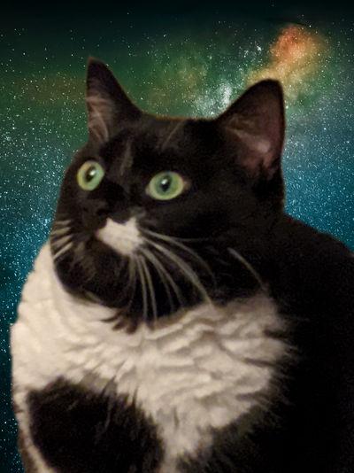Galaxy-pepper-2