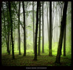 Edge of the forest by manroms