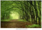 Magic forest 11