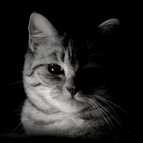 BW Cat by manroms
