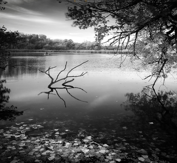 Magic lake 3 by manroms