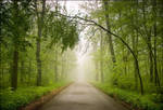Magic forest n