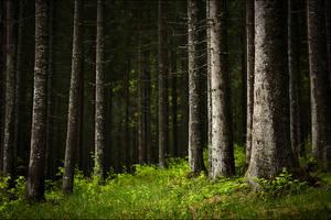 Carpathian magic 3 by manroms