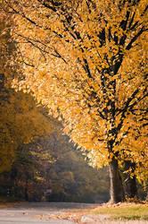 Autumn autumn 2
