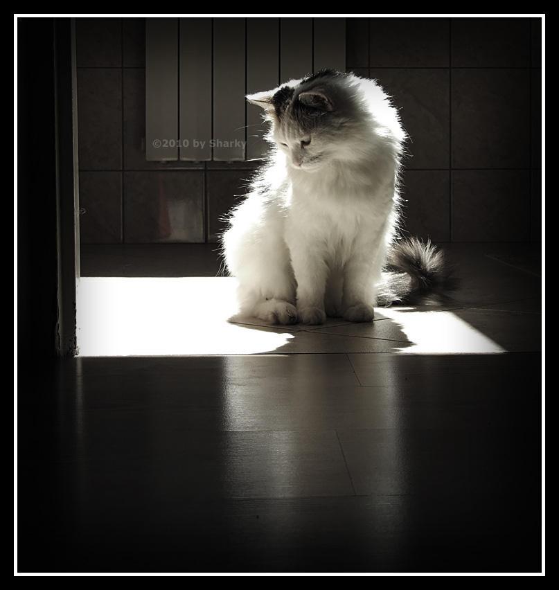 Sunny cat I