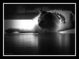 Dark side of the cat