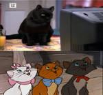 Salem watching the Aristocats