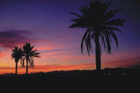 Palm Trees by andstock