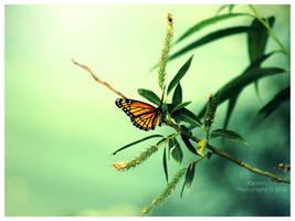 Butterfly I by Kaosah