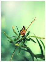 Viceroy Butterfly by Kaosah
