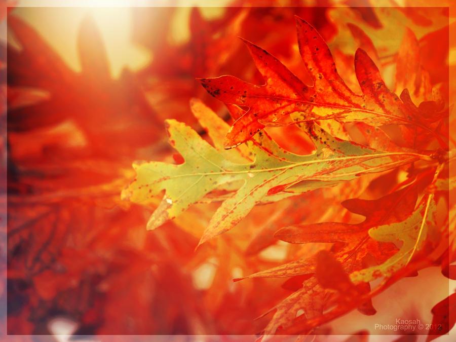 Autumn Fire by Kaosah