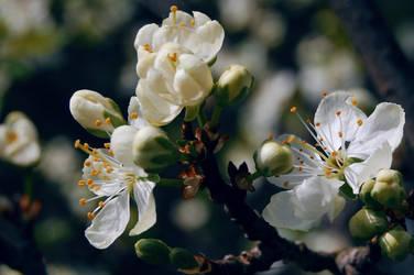 Spring... by Metalheadka