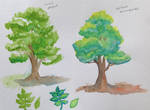 Colour Harmonies - green