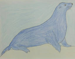 Drawing of a Seal