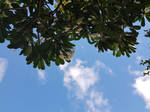Up the Sky from the Tree