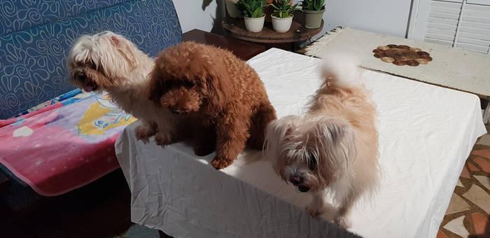 Amber, Cupcake, and Chloe