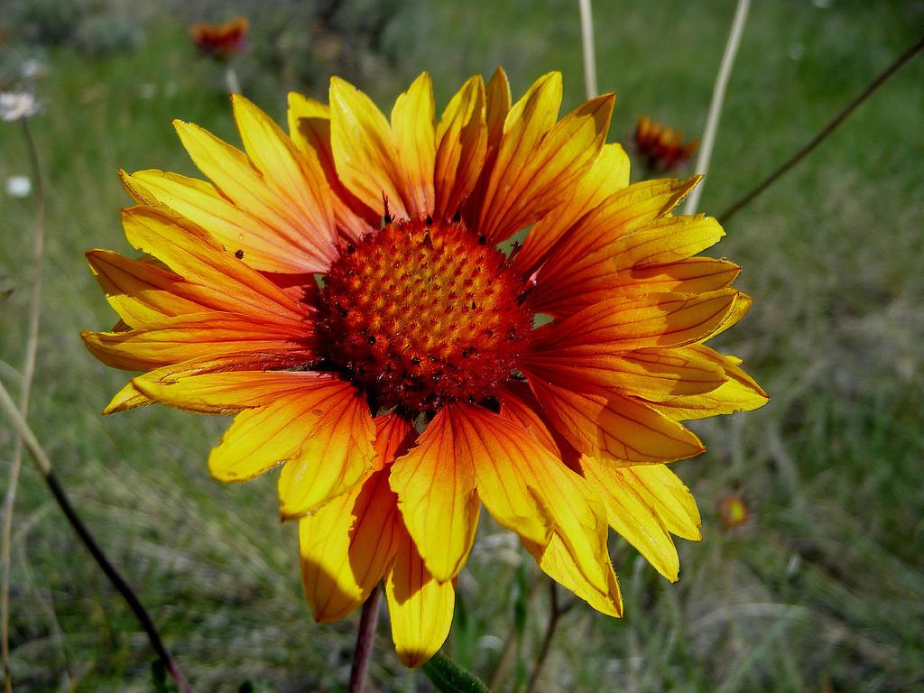 Warm Colored Flower by Radicaun on DeviantArt