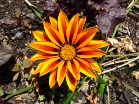Flowery Sunburst