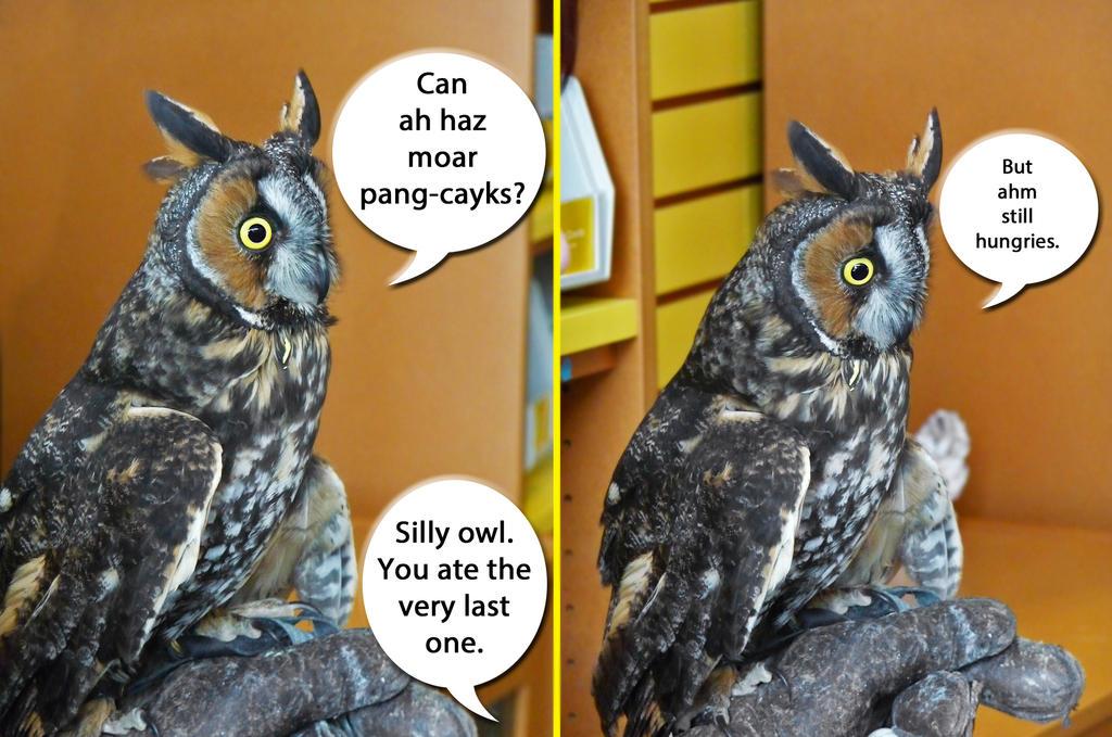 owls essay