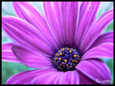 Close-up in my Garden