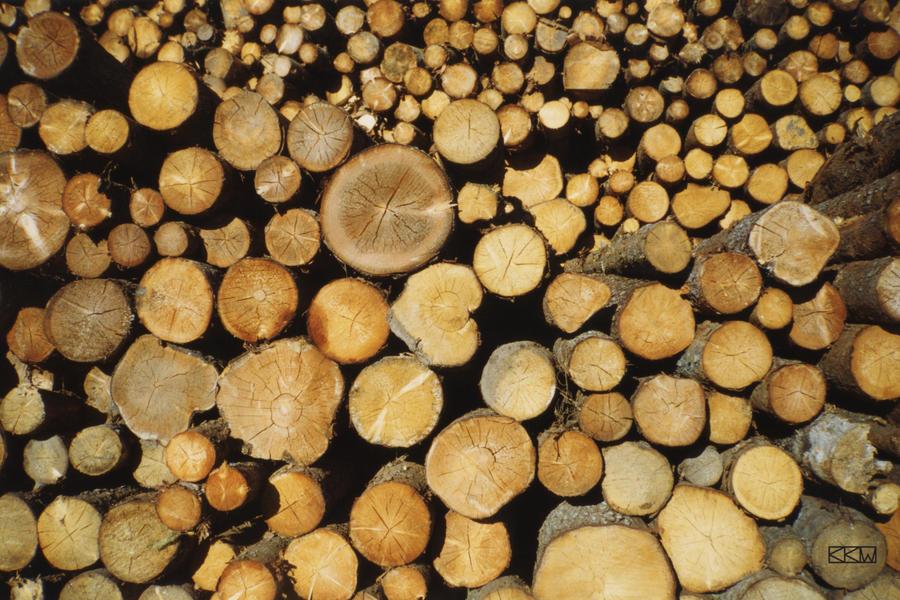 I got wood! by Crigger