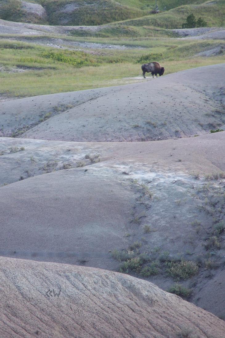 Buffalo at BadlandsNationalPark SD 08/24/2013 5:36 by Crigger