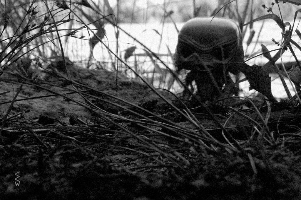 Creature Sighting at Schmeeckle Reserve (Noir) by Crigger