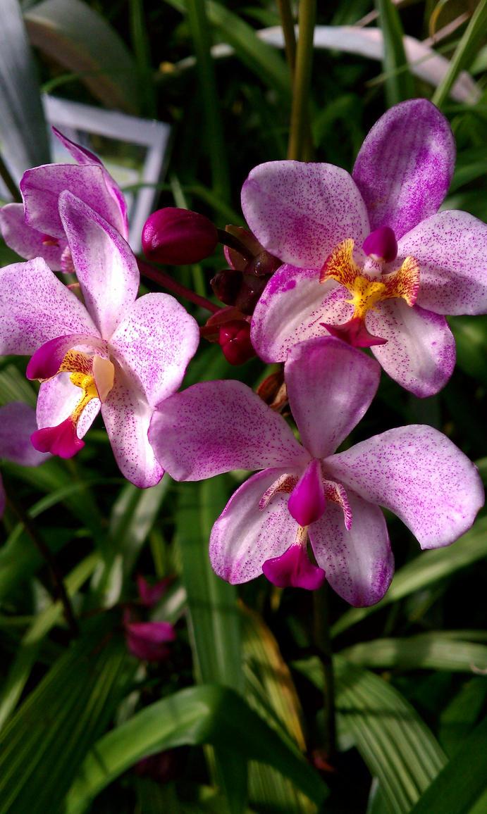 Orchid 2 by MelAnn