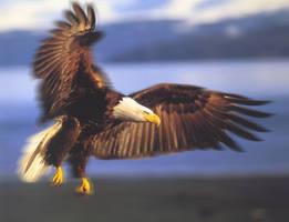 Bald eagle by SilentBreeze