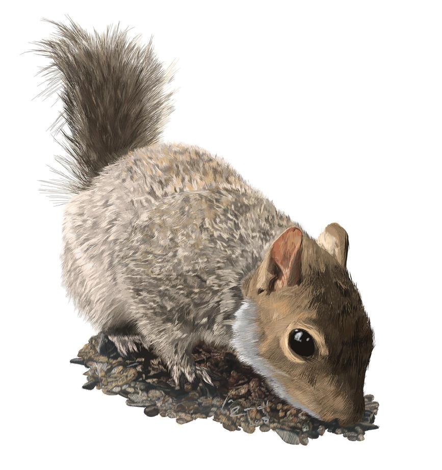 Squirrel by April-Nine