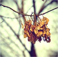 dead wood by estellamestella